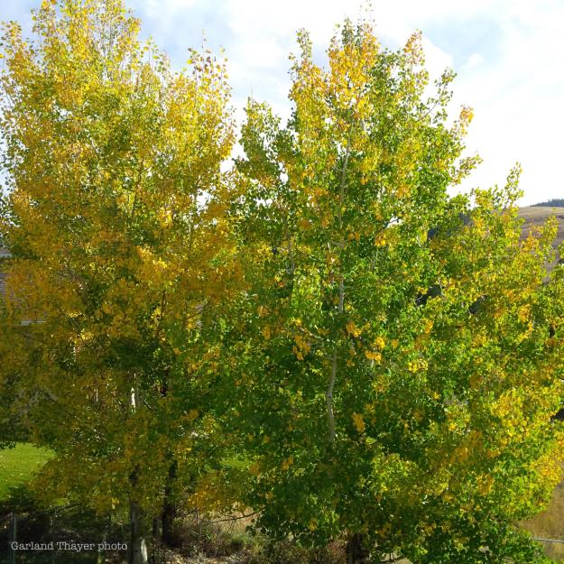green and yellow backyard