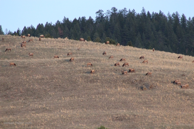 elk above house