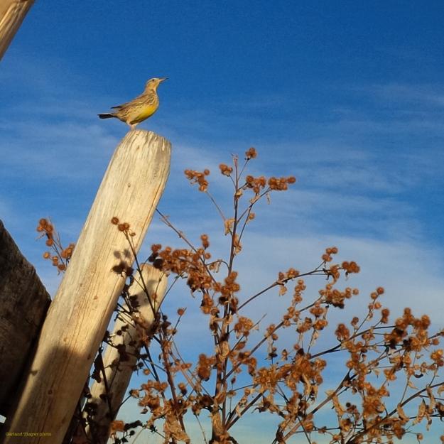 Bird on Stock Tank Post
