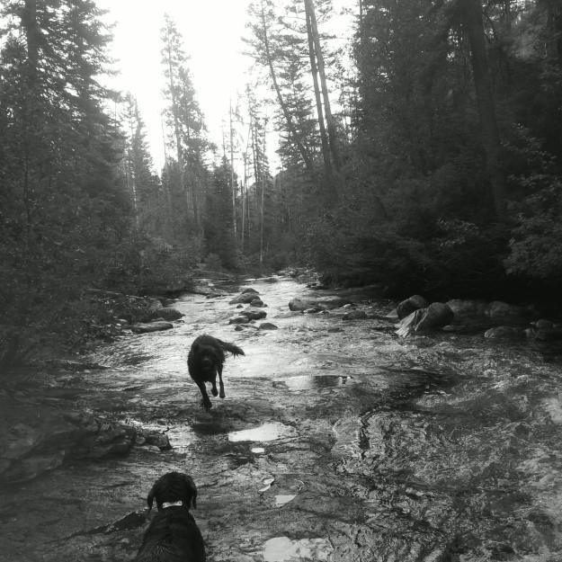 Kootenai Creek - Selway Bitterroot Wilderness
